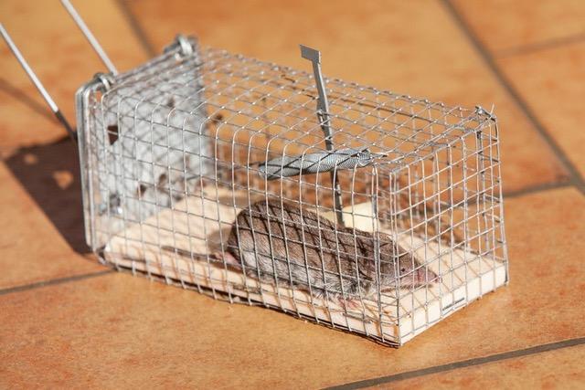Rodent control Dubai