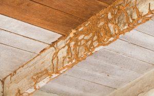 Termite Treatment Dubai